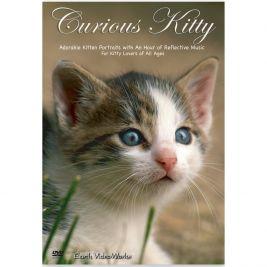 Curious Kitty DVD